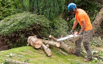 additional services offered by East Barnet tree surgeons