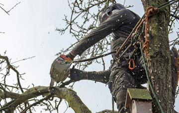 the process of removing dead wood from East Barnet trees