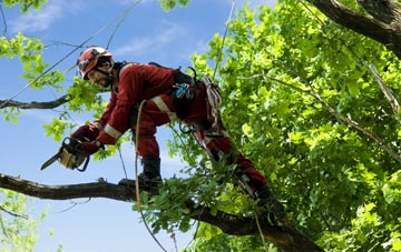 find trusted rated East Barnet tree surgeons in Barnet