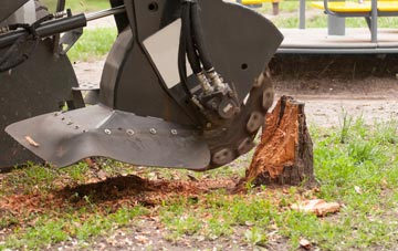 professional East Barnet stump grinding services