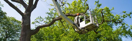 East Barnet tree surgery services