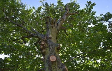 what is East Barnet tree surgery?