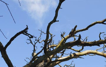 what to do if you notice dead wood