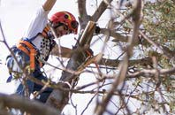 trusted Barnet tree dead-wooding services
