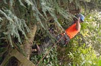 free East Barnet tree surgery quotes